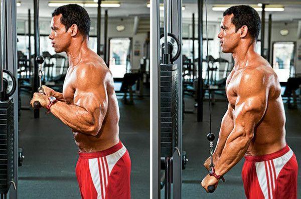 Develop Triceps